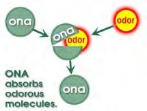 ONA absorbiert Geruchsmoleküle