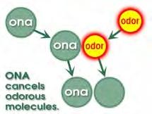 ONA zersetzt Geruchsmoleküle